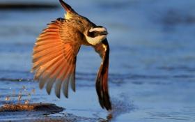 Обои bird, water, feathers, light effect