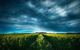 Картинка облака, поле, путь, горизонт, цветы
