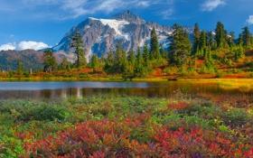 Картинка лес, небо, облака, деревья, цветы, горы, озеро