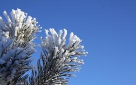 Обои зима, Елка, дерево