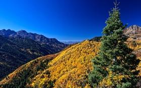 Обои лес, горы, осень, небо