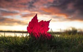Картинка осень, небо, трава, макро, тучи, лист