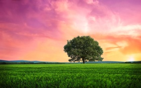 Обои природа, пейзаж, дерево