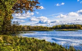 Картинка осень, лес, трава, деревья, озеро, берег
