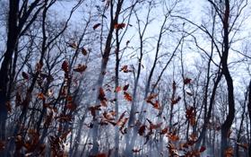 Обои осень, лес, листья, деревья, ветки, природа