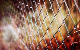Обои осень, макро, сетка, забор, ограда, размытость, металлическая