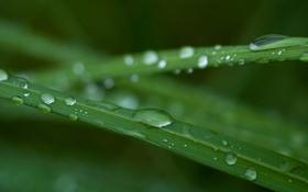 Картинка трава, капли, макро, зеленый, дождь
