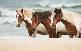 Обои песок, море, кони, лошади