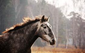 Картинка лошадь, лошади, галоп