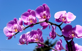 Обои цветение, весна, ветка