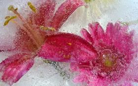Обои вода, цветы, пузырьки, жидкость, лепестки