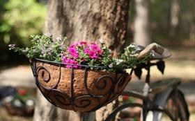 Обои цветы, велосипед, улица