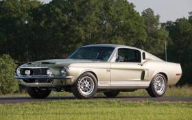 Обои дорога, деревья, Mustang, Ford, Shelby, GT500, Форд