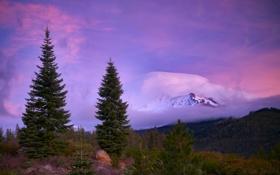 Обои лес, горы, туман