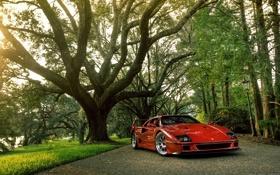 Обои природа, блеск, Ferrari, красная