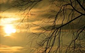 Обои небо, солнце, облака, закат, дерево, ветка, силуэт