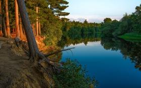 Обои природа, лес, река, деревья