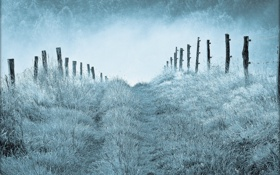 Обои природа, туман, утро