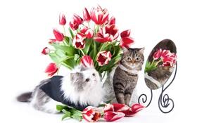 Картинка кошка, кот, цветы, зеркало, тюльпаны