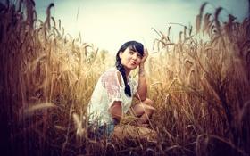 Картинка колоски, коса, небо, поле, девушка, пшеница