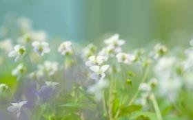 Картинка зелень, макро, цветы, природа, легкость, растения, весна