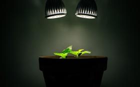 Обои свет, лампы, растения, горшок
