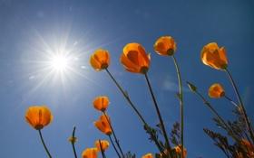 Обои небо, цветы, природа