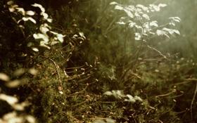 Обои листья, иголки, ветки, растение, мох