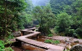 Картинка лес, деревья, парк, дорожка, мостик