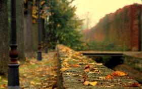 Обои грусть, осень, листья