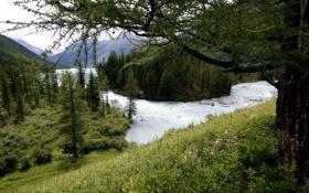 Картинка лес, вода, горы, озеро