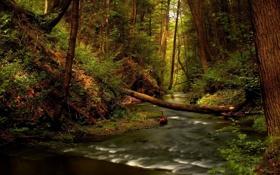Обои лес, деревья, ручей