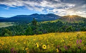 Картинка США, облака, небо, лучи солнца, лес, Flagstaff, деревья