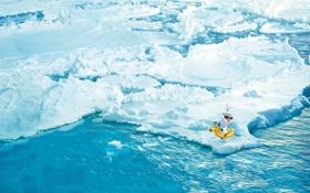 Картинка вода, снег, лёд, снеговик, Frozen, айсберги, Walt Disney