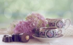 Обои цветы, конфеты, кружка, чашка