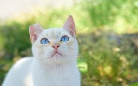 Обои кошка, лето, кот, взгляд, морда, котэ