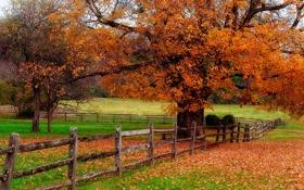 Обои дорога, осень, листья, природа, colors, colorful, road