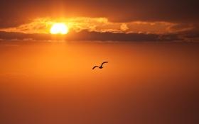 Картинка солнце, облака, полет, закат, чайка, вечер