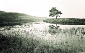 Картинка пейзаж, река, дерево