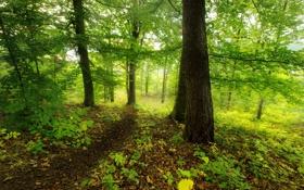 Обои фото, Природа, Деревья, Лес
