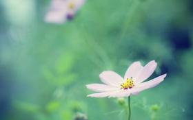 Картинка зелень, цветок, лето, трава, природа, розовый, цвет