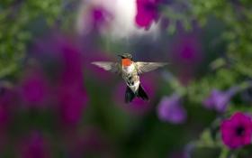 Картинка природа, фон, птица
