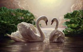 Обои небо, птицы, романтика, пара, белые, живопись, лебеди