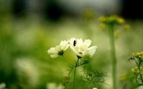 Картинка зелень, белый, цветок, лето, трава, природа, зеленый