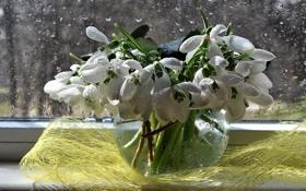 Обои подснежники, весна, вода, натюрморт, дождь, композиция, букет