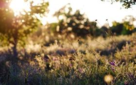 Картинка поле, лето, трава, солнце, свет, блики, поляна