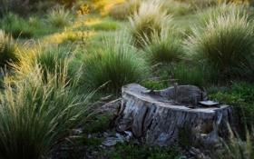 Обои зелёная, трава, пенёк, природа, Memories, одинокий