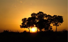 Обои солнце, деревья, фото, пейзажи, дерво
