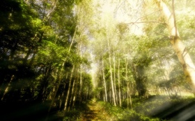 Обои forest, sunlight, Forestwalks