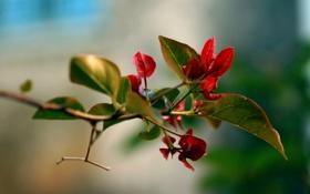 Обои листья, цвета, макро, природа, фон, обои, растение